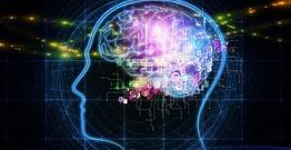 İnsan beyni rəqəmləri necə hesablayır?