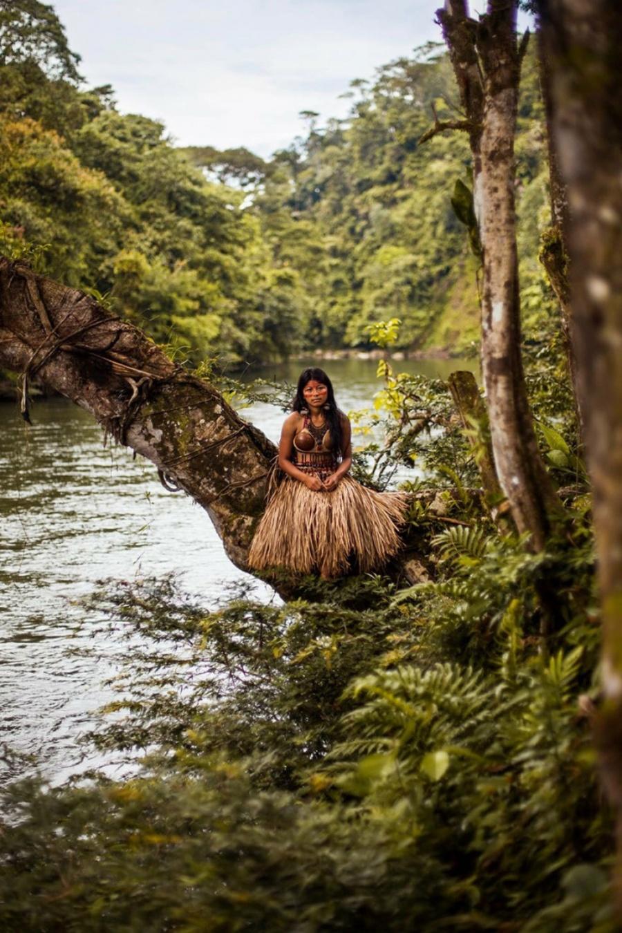 Amazon meşələri